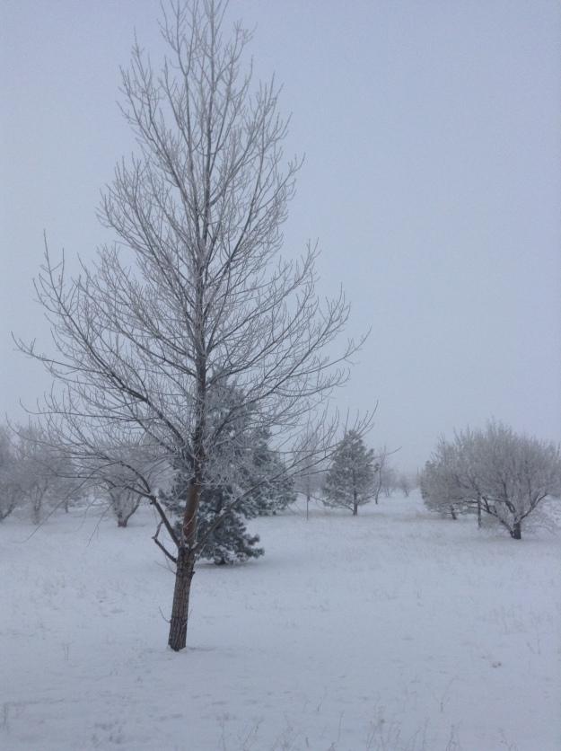 Wyoming Fall and Winter.JPG14