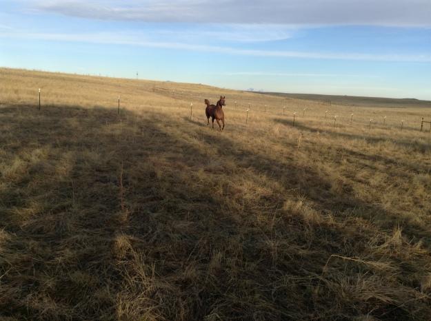 Wyoming Fall and Winter.JPG27
