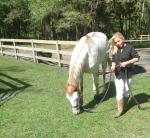 April 2016 Horses